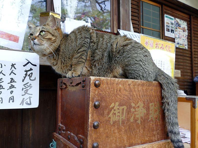 猫好きには堪らない!京都の梅宮大社 | KANSAIPRESS